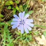 Purple flower. Trees grass Michigan Stock Photos