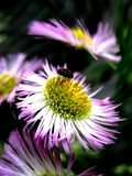 Purple flower twist Stock Photos