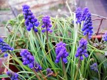 Purple flower in urban city. Picture of purple flower in city stock photo