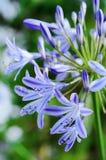 Purple Flower Vertical Royalty Free Stock Image