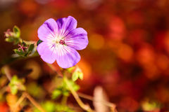 Purple flower and vibrant red background Stock Photo