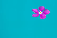 Purple flower on water. In the morning Stock Photo