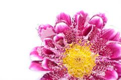 Purple flower in water Stock Image
