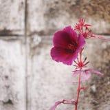 Purple flower stock photos