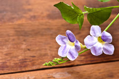 Purple flower on wood background Royalty Free Stock Photos