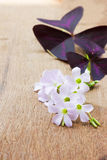 Purple flower on wooden background Royalty Free Stock Photos