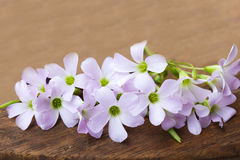 Purple flower on wooden background Stock Photography