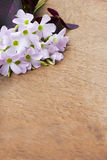 Purple flower on wooden background Royalty Free Stock Image
