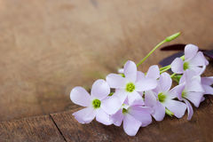 Purple flower on wooden background Stock Image