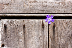 Purple Flower in Wooden Door Royalty Free Stock Photos