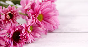 Purple flower zoom wood background valentine day Stock Images