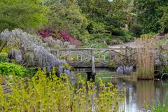 Purple flowered wisteria climbing over a bridge at RHS Wisley, flagship garden of the Royal Horticultural Society, Surrey, UK. Purple flowered wisteria climbing royalty free stock image