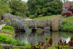 Purple flowered wisteria climbing over a bridge at RHS Wisley, flagship garden of the Royal Horticultural Society, Surrey, UK. Purple flowered wisteria climbing stock photo