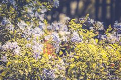 Purple flowering plant. Close up image of a purple flowering plant in New York City Royalty Free Stock Photography