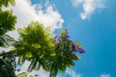 Purple Flowering Plant Low-angle Photography at Daytime Royalty Free Stock Image