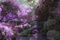 Purple flowering trees in garden Stock Photo