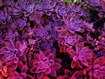 Purple flowering vegetation. Neon organic avatar movie style royalty free stock photo