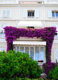 Purple flowers around windows, green orange trees Stock Images