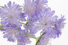 Purple flowers Stock Photography