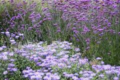 Purple flowers. Colorful purple flowers Stock Image