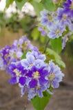 Purple flowers Stock Photo