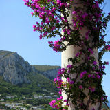 Purple flowers. Flowers around a white pole under the tropical sun Stock Photo