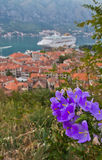 Purple flowers above Kotor bay. Royalty Free Stock Images