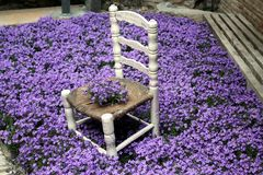 Purple flowers around a little chair Stock Images