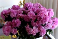 Purple flowers. Purple  azalea flowers in the pot Royalty Free Stock Images