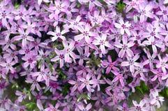 Purple flowers background Stock Image