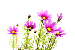 Purple flowers background Stock Photography