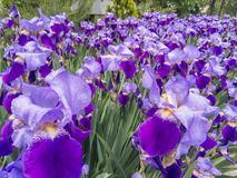 Purple flowers in background stock photo