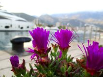 Purple flowers on the background of the Marina. stock image