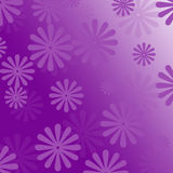 Purple flowers  background. Background texture purple flower  texture Royalty Free Stock Images