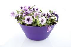 Purple flowers in a basket. In a white background stock photo