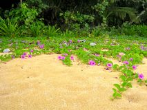 Purple flowers on the beach Royalty Free Stock Photo