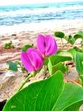 Purple flowers on the beach. Stock Photo