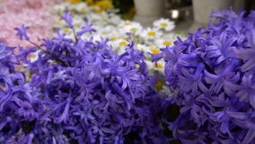 Purple flowers. And beautiful background stock footage