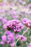 Purple flowers on beautiful bokeh Royalty Free Stock Photo