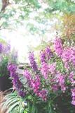 Purple flowers on beautiful bokeh background. Purple flowers in nature with beautiful bokeh background Stock Photography