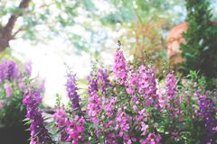 Purple flowers on beautiful bokeh background. In nature Royalty Free Stock Photos