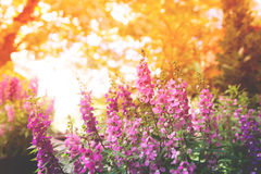 Purple flowers on beautiful bokeh background. With sunlight Royalty Free Stock Photography
