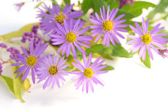 Purple flowers and berries Royalty Free Stock Photography