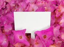 Purple flowers with blank label Stock Image
