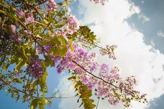 Purple flowers bloom in summer Stock Images