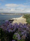 Purple flowers blooming on coast in La Jolla, San Diego, California stock photography