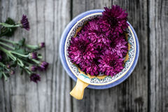 Purple Flowers in Blue Brown and Blue Ceramic Bowl Royalty Free Stock Image