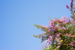 Purple flowers blue sky background Royalty Free Stock Images