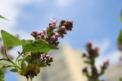 Purple flowers in blue sky Royalty Free Stock Images