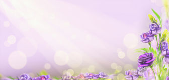Purple flowers on blured background with bokeh, banner Stock Photography